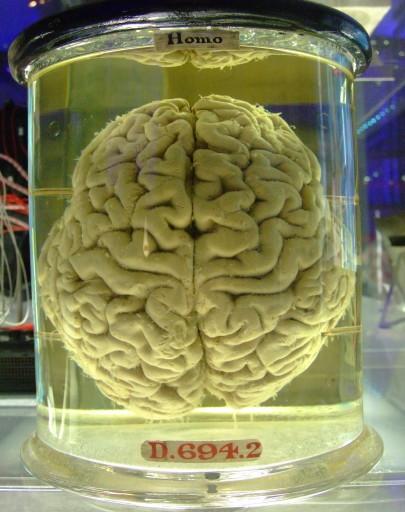 hersenen op sterk water