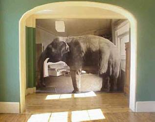 olifant in de kamer