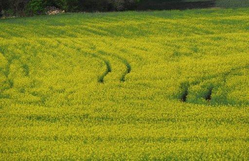 landbouw, bodem, peak soil
