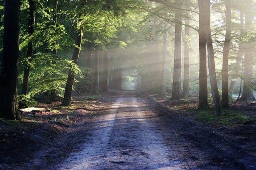 bos, natuur